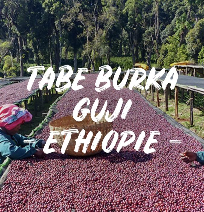 TABE BURKA GUJI - ETHIOPIE 1kg