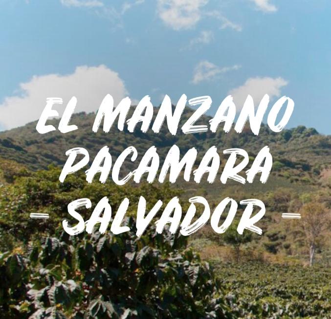 EL MANZANO PACAMARA - SALVADOR 1kg