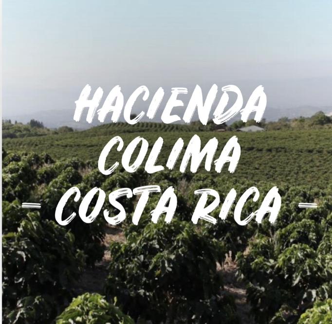 HACIENDA COLIMA - COSTA RICA 1kg