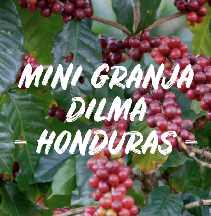 MINI GRANJA DILMA - HONDURAS 250g