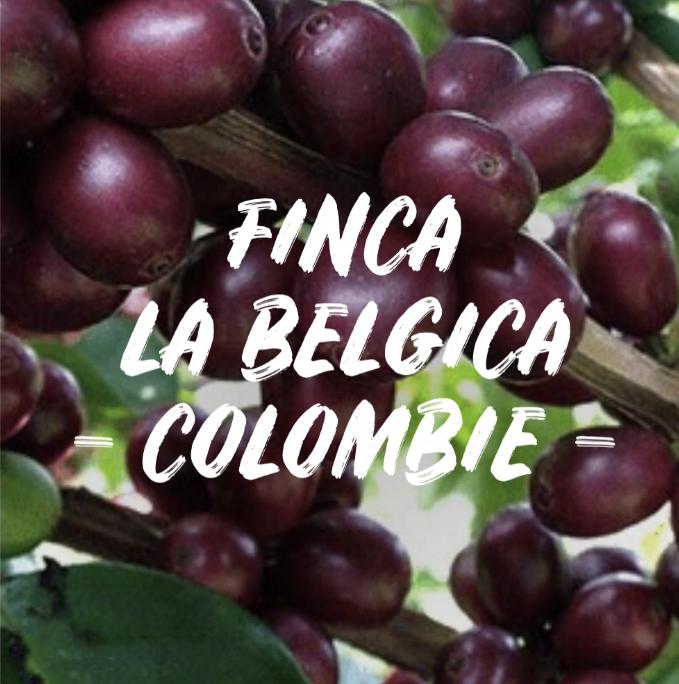 café colombie finca belgica kaova café